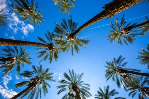 Coachella Palm Trees and Clear SkiesPalm Trees and Clear skies fill the image in Coachella, California. Two airplanes flying past in the distant background. Summertime and the living's easy.